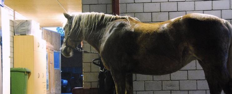 rain on mars - ride my pony