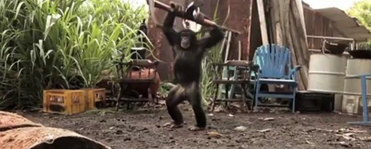 Ape-AK
