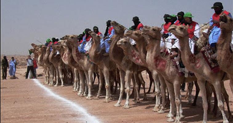 world's largest camel race