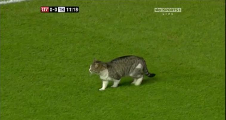 cat on pitch liverpool v spurs