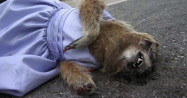 Dead animal dancing