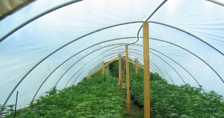 weedfarm