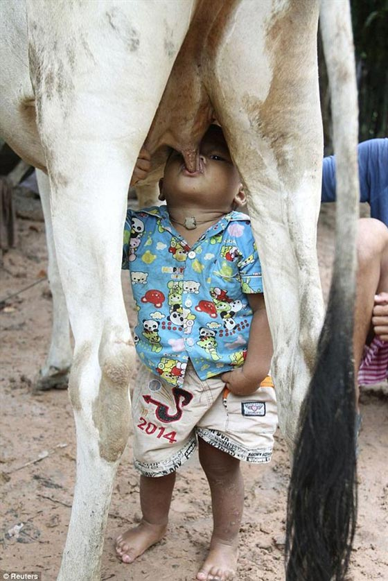 Little Boy Enjoying Fresh Milk