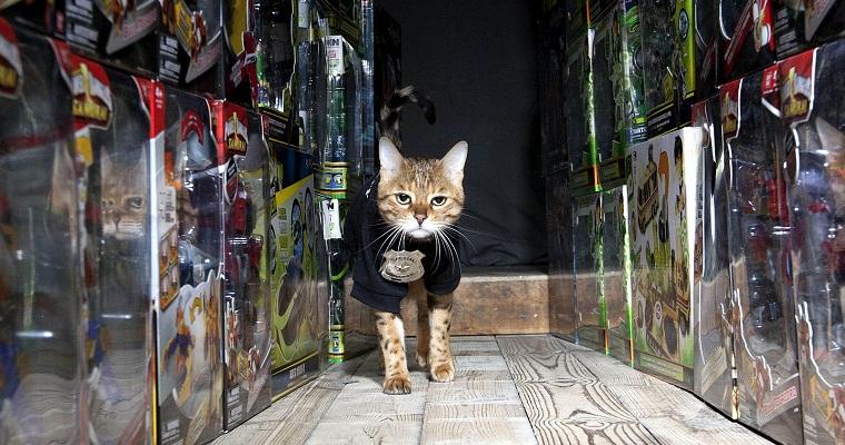Cat gets job as security guard sick chirpse