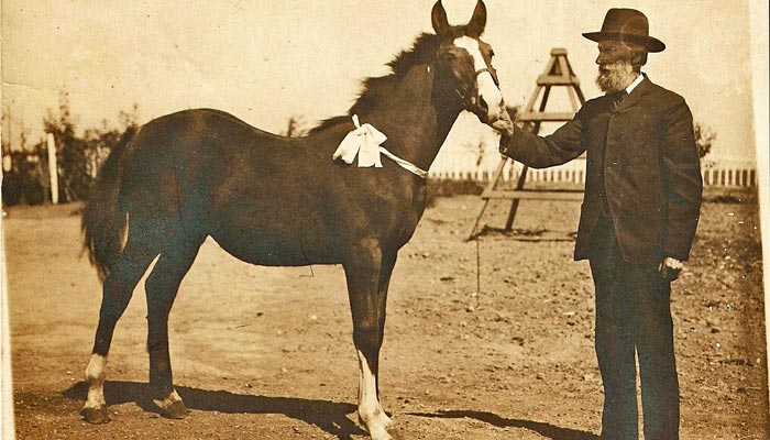 Antique photo of man and horse