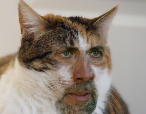 nic cage cat face 3