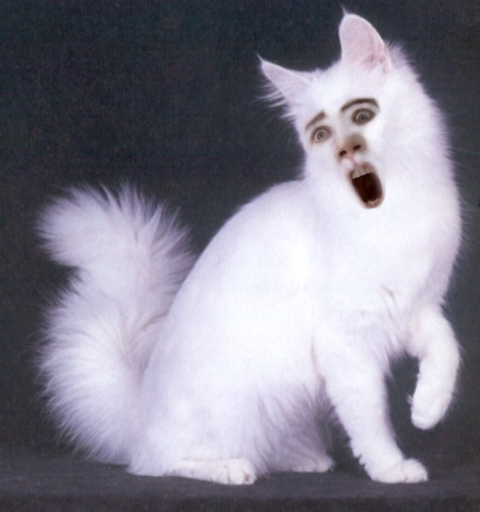 nic cage cat face 4
