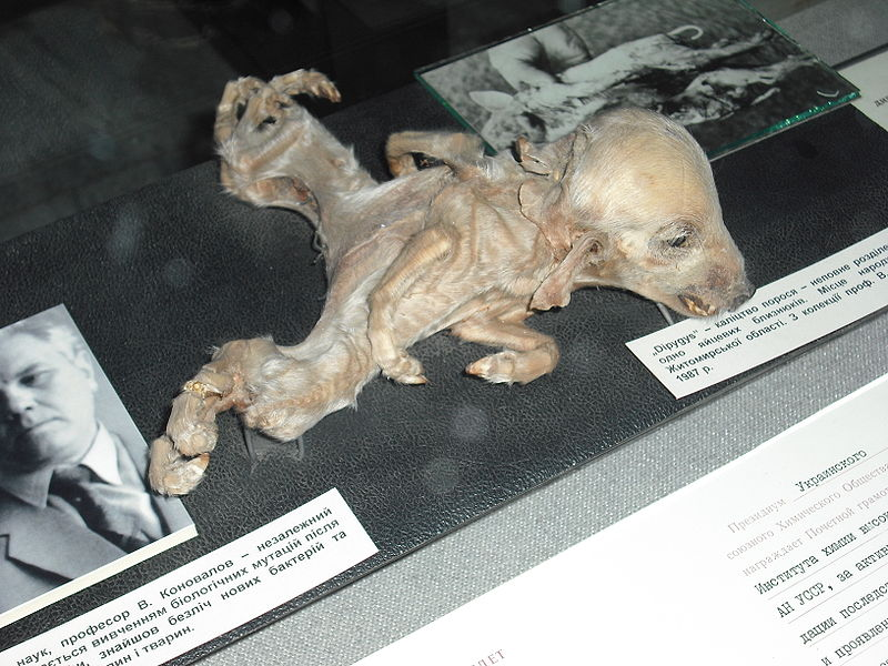 Chernobyl - Mutated Dog