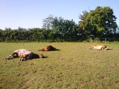 Horses On Ketamine 2