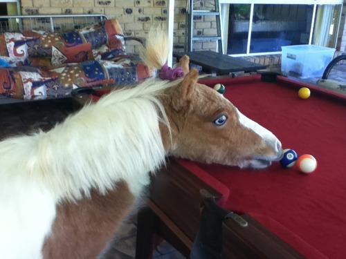 Horses On Ketamine 4