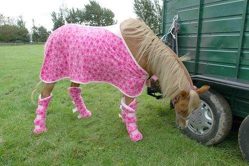 Horses On Ketamine 5