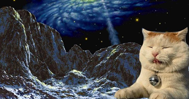 Internet Cat