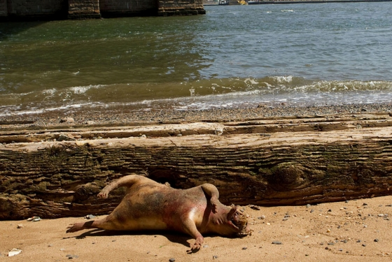 Montauk Monster July 2012