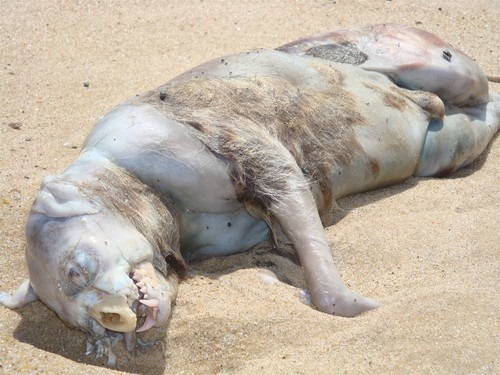 Montauk Monster - May 2009