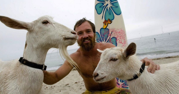 Surfing Goats
