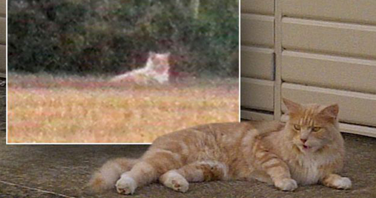 The Essex Lion and a domesticated cat