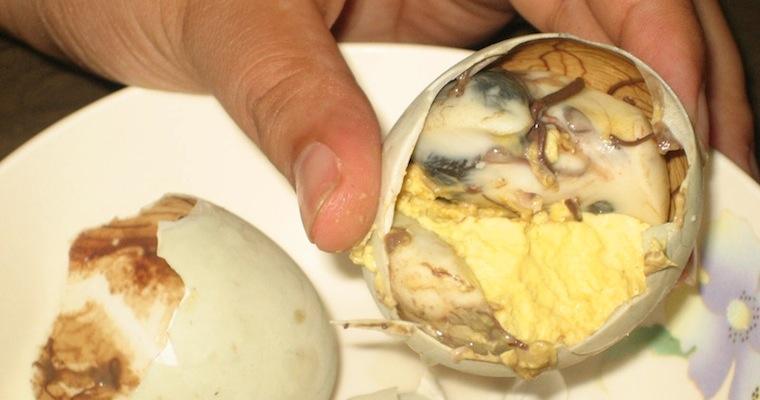 Duck Embryo