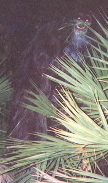 Myakka Skunk Ape Full Body