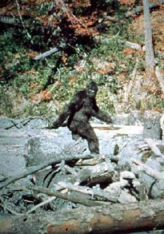 Patterson Big Foot - Gorilla Suit