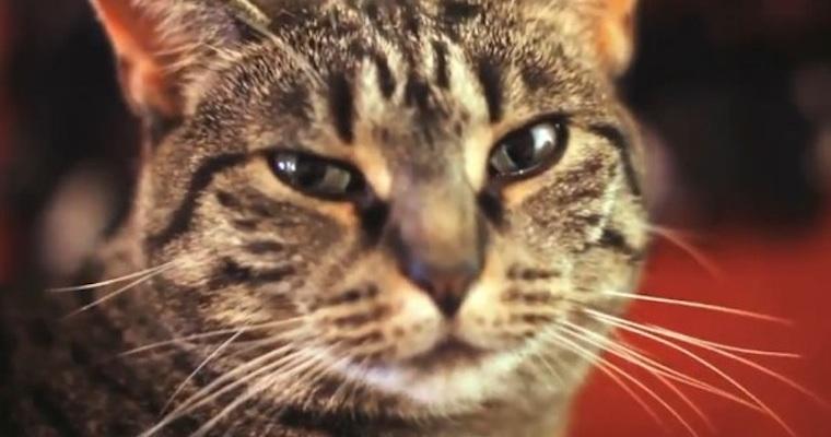 Soul Collective Cat