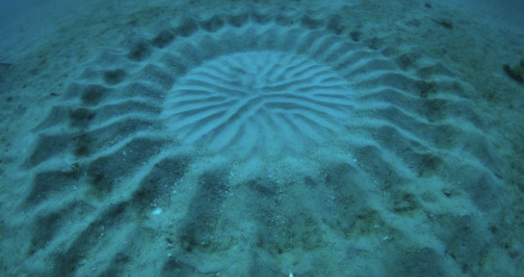 underwater crop circle featured