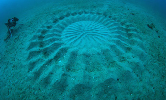 underwater crop circles 2