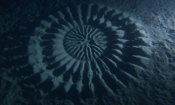 underwater crop circles 3