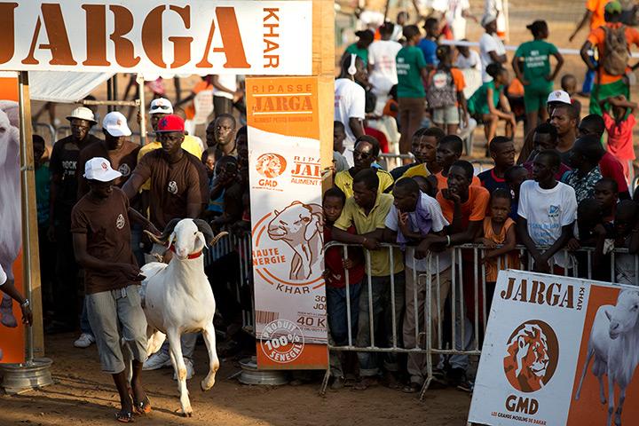 Djibi Seck leads ram Abdoulaye into the ring
