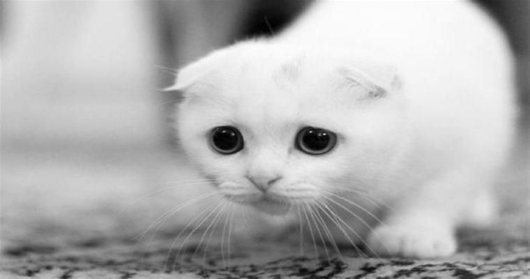 Sad Pussy