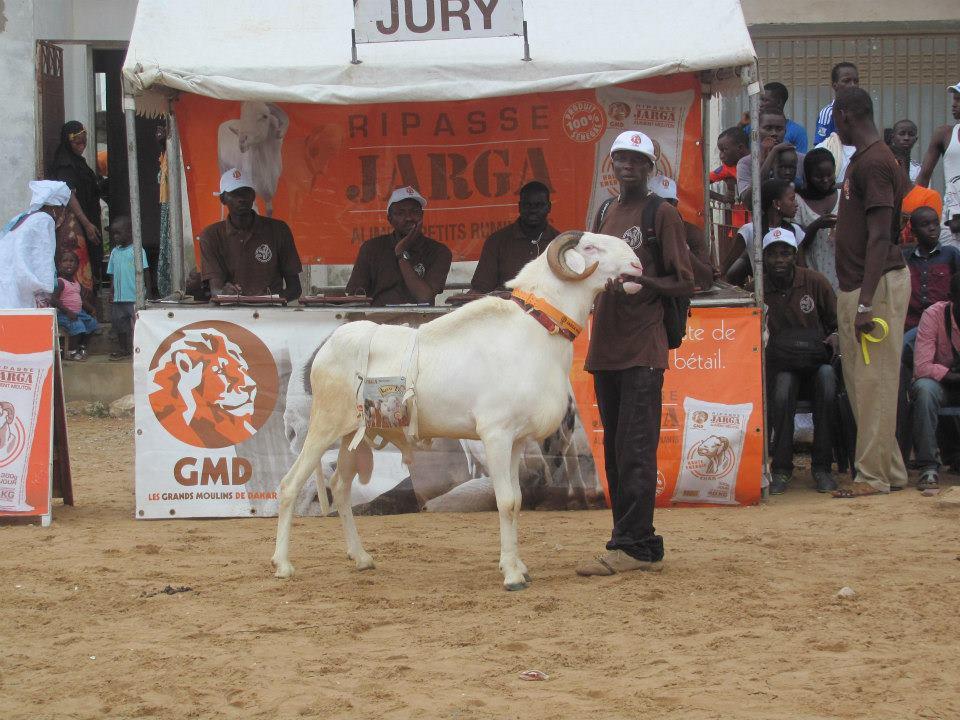 Senegal Sheep Judges Table