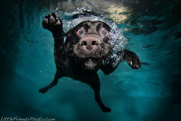 Seth- Casteels-Underwater-Dog-Photography-19