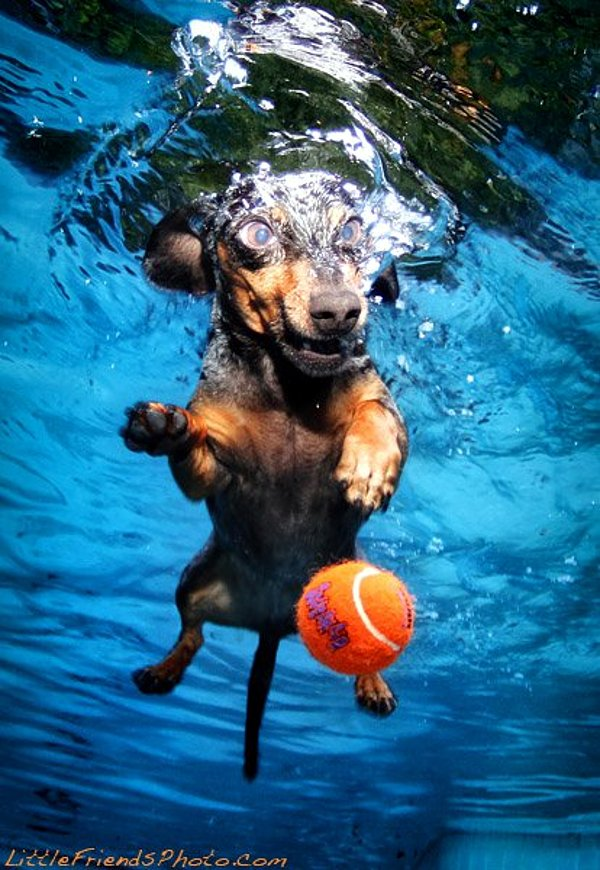 Seth-Casteels-Underwater-Dog-Photography-2