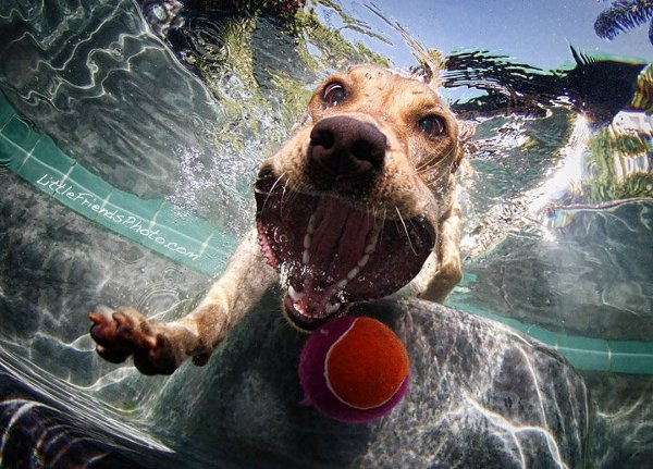 Seth-Casteels-Underwater-Dog-Photography-7