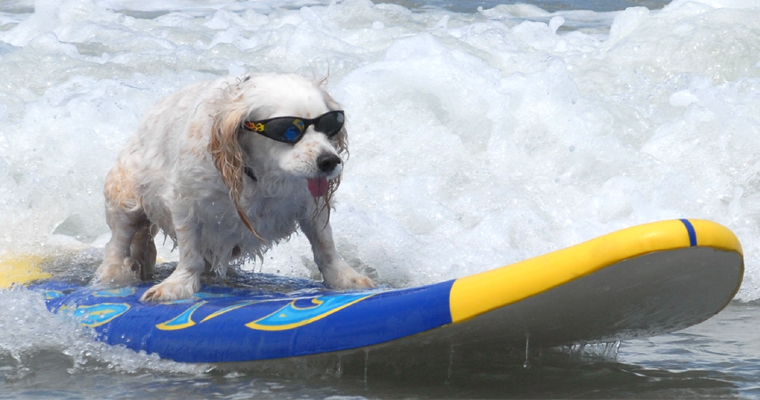 surf dog shades