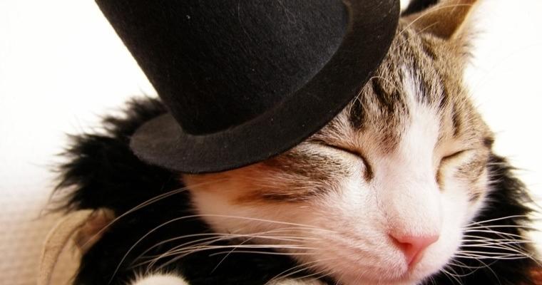 well dressed cat