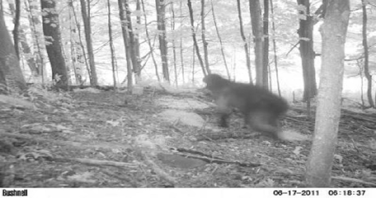 Bigfoot Wldlife Photography Competition Edit