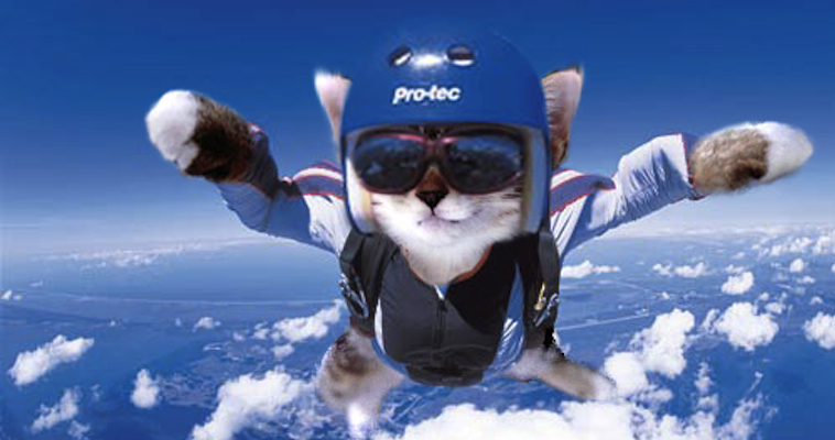 Cat Skydiving