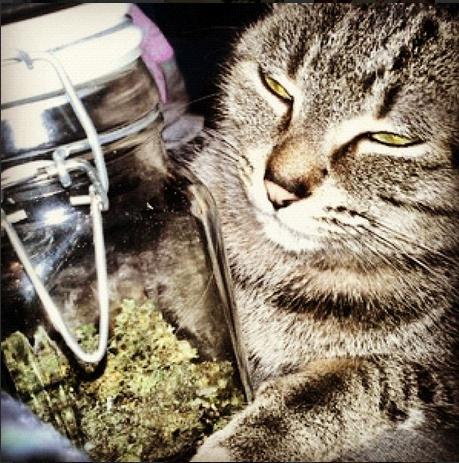 Cats Smoking Weed 10