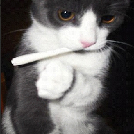 Cats Smoking Weed 13