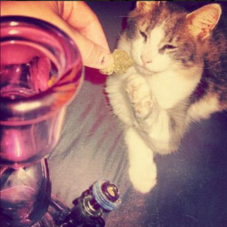 Cats Smoking Weed 14