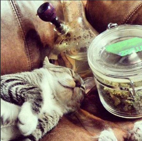 Cats Smoking Weed 4
