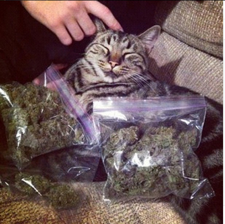 weed chat