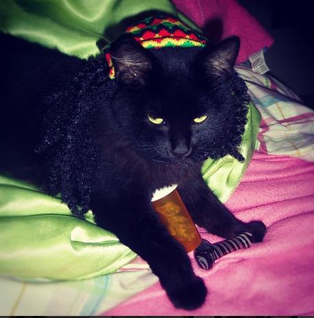 Cats Smoking Weed 6