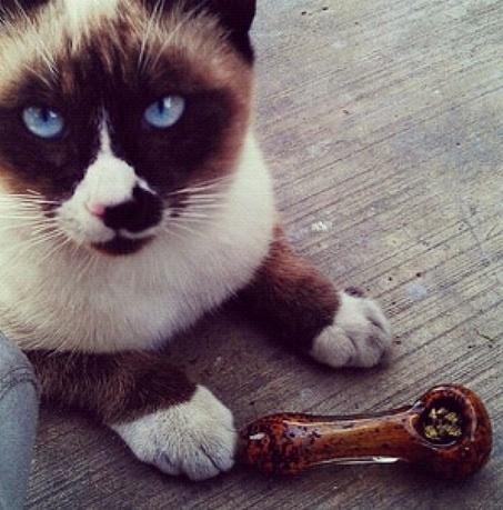 Cats Smoking Weed 8