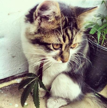Cats Smoking Weed 9