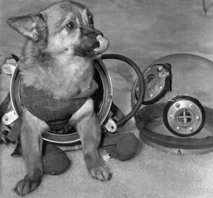 Dogs In Space Suits 4