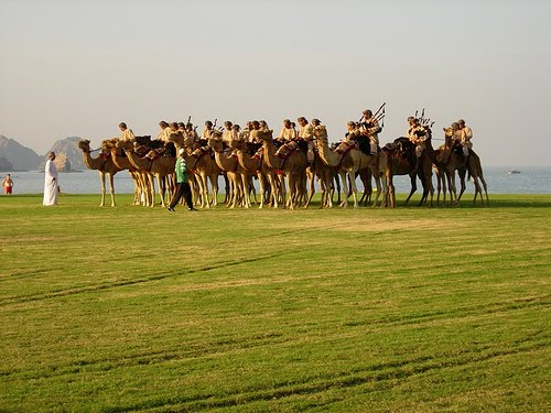 Sultam Of Oman Camel Mounted Bagpipe Band - At Work