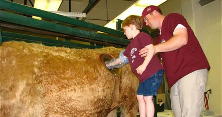 Cannulated Cow - Child Elbow Deep