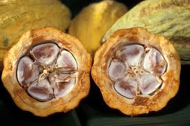 Cocoa Beans In A Cacao Pod