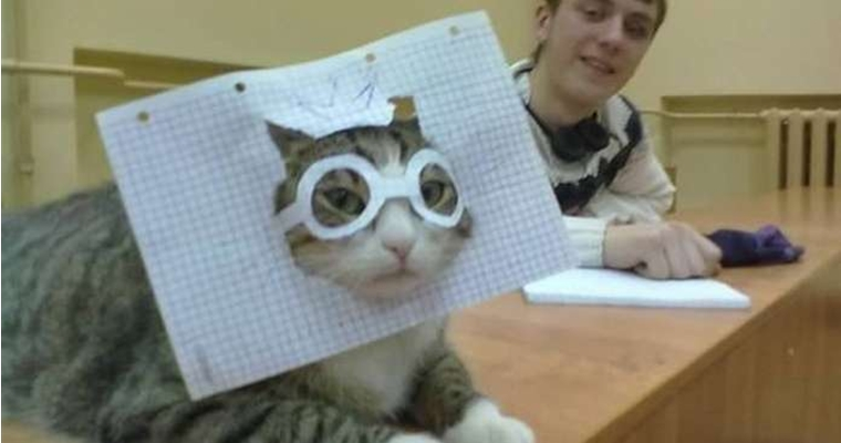 Hilarious Russian Photos - Russian Cat Mask